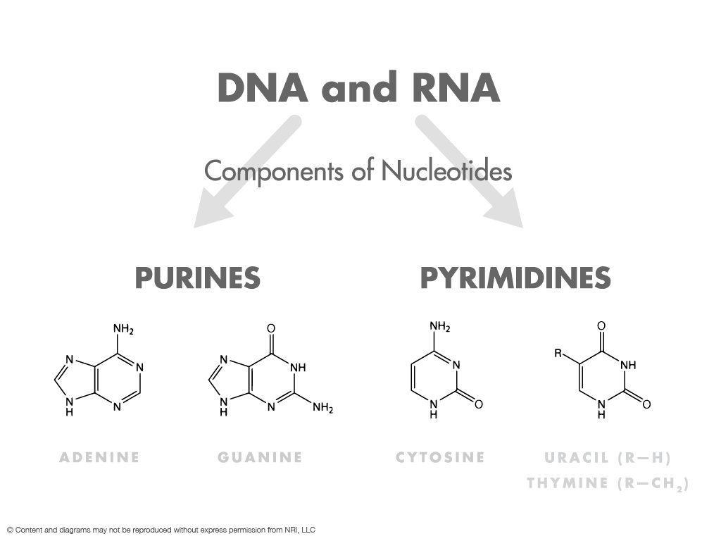Chapter 1 feel good nucleotides nucleotides form the basis of both dna and rna most people are familiar with the concept of dna as the genetic blueprint malvernweather Images